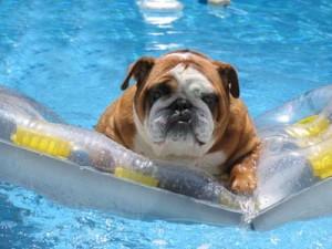 Carmel Valley San Diego Summer Dog Care