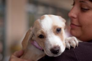Carmel Valley San Diego Community | Second Chance Dog Rescue