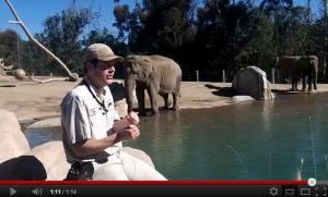 Carmel Valley San Diego Community | San Diego Zoo | Elephant Odyssey