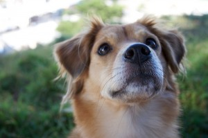 Carmel Valley San Diego Community | The Benefits of Having a Pet