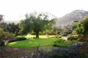 Carmel Valley San Diego Community | Cynthia Dial | Pepper Tree