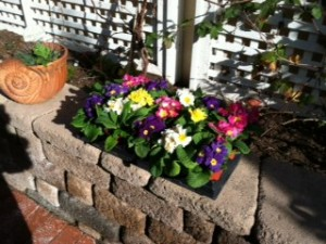 Carmel Valley San Diego Community | Stevie Hall | Flower Bed