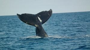 Carmel Valley San Diego Community | Darcie Czajkowski | Whale