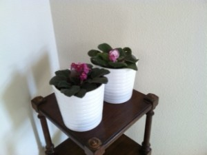 Carmel Valley San Diego Community | Stevie Hall | African Violets