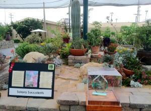 Carmel Valley San Diego Community | Stevie Hall | Solana Succulents