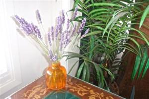 Carmel Valley San Diego Community | Gwen Coronado | Balance of Five Elements