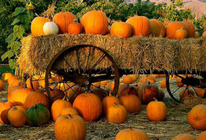 Carmel Valley San Diego Community | Darcie Czajkowski | Pumpkin Patch